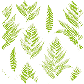 Fabric Sample in Fern Translucent